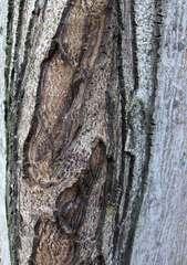 Rinde eines Walnussbaumes #1 - Walnuss, Walnussbaum, Stamm, Borke, Rinde, Struktur, Muster, Holz, Laubbaum, Natur, Gehölz