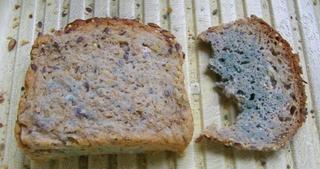 Verschimmeltes Brot - Brot, Schimmel, Zersetzung, Destruent, Stoffkreislauf, Ekel, giftig, Lebensmittelverderb, Mikroorganismen, Lagerung, Anzeichen, Schimmelbildung, Kennzeichen, Verderb, Hygiene, Schimmelrasen, äußerliches Kennzeichen