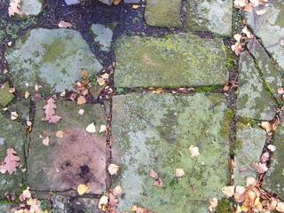 Buntsandstein - Buntsandstein, Verwitterung, Witterungseinfluß, Witterungsmerkmal, Moos, Flechten, Sporen, Geologie