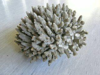Korallen - Korallen, Kalk, Meerespflanze, Steinkoralle
