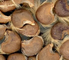 samen von Hibiskus - Samen, Gartenpflanze, Makro, Hibiskus, Eibisch, Malvengewächs