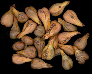 Traubenkerne - Makro, Traubenkerne, Obst, Samen, Traubenkernöl