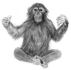 Affe, Schimpanse - Affe, Schimpanse, Primat, Menschenaffe, Anlaut S, Anlaut Sch
