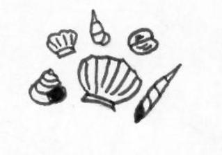 Muscheln - Muscheln, shells, seashells, sammeln, Muschel, Anlaut M, Wörter mit sch