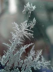 Eisblumen - Eisblumen, Eisblume, Eiskristall, Eisstern, Wetter, Winter, Jahreszeiten, kalt, Eis, Schneestern, gefrieren, Reif, Kristall, Winter, Impression, Raureif, Niederschlag, Resublimation, nadelförmig, Eisnadeln, Wetter, Niederschlag, Physik, erstarren