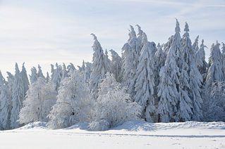 Winter - Winter, Frost, Eis, Raureif, Reif, frieren, eisig, kalt, Schnee, Schneebruch, Fichte, Nadelbaum, Laubbaum, Bäume