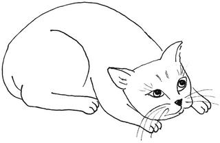 ängstliche Katze - Katze, Kätzchen, Haustier, Angst, ängstlich, Anlaut K, Illustration