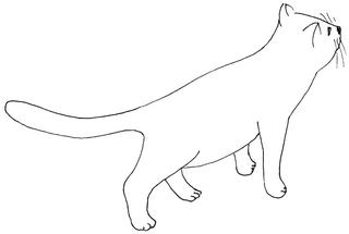 neugierige Katze - Katze, Kätzchen, Haustier, neugierig, Anlaut K, Illustration