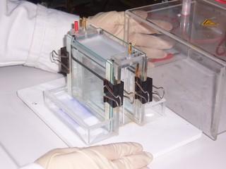 Acrylamidgel - Molekularbiologie, Acrylamidgel, Elektrophorese, Trennung, Analyse, Analytik, Elektroden
