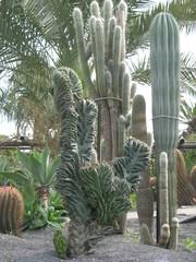 Kakteen - Botanischer Garten, Kaktus, Stammsukkulenten, Sukkulenten, Stachel, Dorn