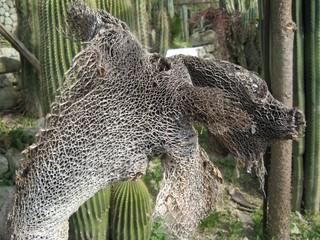 Abgestorbener Kaktus - Kaktus, Stützgewebe, Sklerenchym, Struktur, Netz