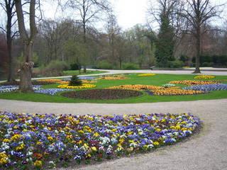 Blumenpracht Berlin Tiergarten - Berlin, Park, Parkanlage, Blumen, Frühling, Blumenbeet, Blumenrabatte, Frühblüher, Stiefmütterchen