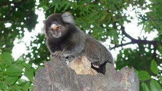 Mohrenmaki #2 - Mohrenmaki, Lemur, Lemuren