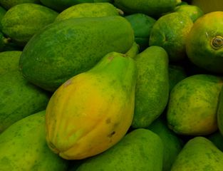 Papaya - Papaja, Carica papaya, Melonenbaumgewächse, Früchte, Obst