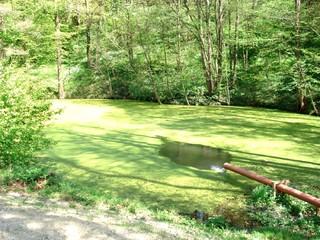 Teich - Wasser, Teich, Wasserlinsen, grün, Ruhe, Wald, fließen, Rohr, Zufluss, Licht, Schatten, Spiegelung, Sonne, hell, dunkel