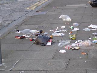 Möwen beim Frühstück in Edinburgh - Möwe, Seagull, Edinburgh, Frühstück, Müll
