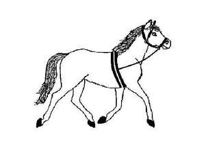 Pferd - Pferd, Voltigierpferd, Zirkuspferd