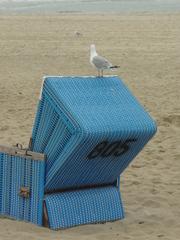 Sylt - Strandkorb, Möwe, Strand, Sand, weit, Schreibanlass, blau, Nordsee