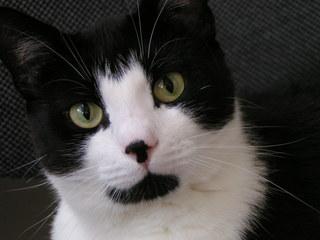 Katzengesicht  - schwarz-weiß, Katze, Kater, Auge, Katzengesicht, Fleck