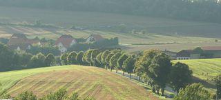 Landschaft   #3 - Landschaft, Kornfelder, Ernte, Herbst, Dunst, Allee