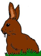 Hase gemalt (bunt) - Hase, Wildtier, Haustier, Anlaut H, Illustration