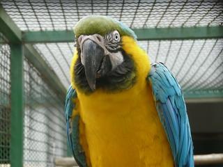 Papagei Ara - Papagei, Ara, Dschungel, Vogel, Käfig