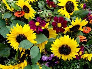 Herbstblüten - Sonnenblumen, Herbst, Blumenstrauß, Blüten, bunt, Dekoration