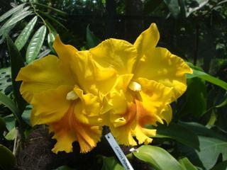 Orchidee_4 - Orchidee, Orchideen, Blüte, Blüten, Stempel, Pflanze, Pflanzen, Blume, Blumen