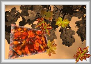 Aus dem Rahmen ... (6) - Collage, Perspektive, Herbst, Blätter, Effektbild