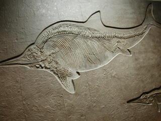 Fossiler Fisch - Fossilien, Fisch