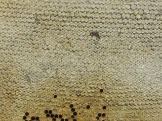 Bienenwabe mit Honig - Biene, Bienenstock, Honig, Wabengebilde, Zellen, Bienenhaltung, Wabe, Bienenwabe