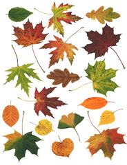 Herbstlaub - Herbstlaub, Laub, Laubblatt, Blatt, Blätter Herbst, Herbstfärbung