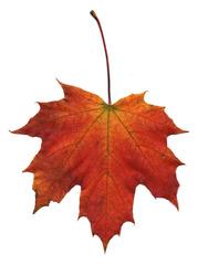 Ahornblatt - Ahorn, Spitzahorn, Ahornblatt, Herbstlaub, Laub, Laubblatt, Blatt, Herbst, Herbstfärbung, rot