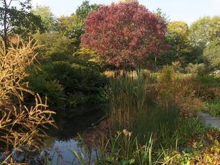 Herbststimmung #1 - Herbst, Herbststimmung, Herbstfarben, Farbe, rot, orange, braun, Natur, Garten, Park, Berggarten