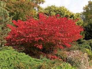 Herbststimmung #6 - Herbst, Herbststimmung, Herbstfarben, Farbe, rot, orange, braun, Natur, Garten, Park, Berggarten