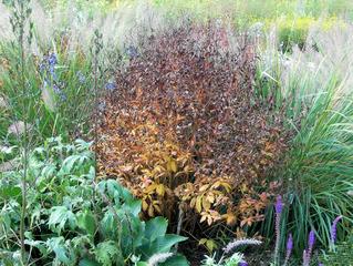 Herbststimmung #7 - Herbst, Herbststimmung, Herbstfarben, Farbe, rot, orange, braun, Natur, Garten, Park, Berggarten
