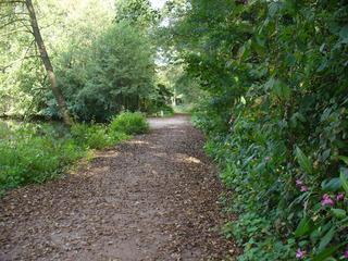 Sommerende 3 - Wald, grün, Himmel, Weg, braunes Laub, Schreibanlass