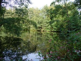 Sommerende 2 - Teich, Waldlandschaft, Blumen, Bäume, Himmel, rosa, grün, Spiegelung