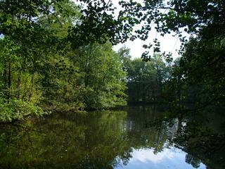 Sommerende 1 - Sommerende, Waldlandschaft, Teich, Himmel, Bäume, grün, Spiegelung