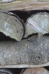 Was_ist_das # Pflanzen - Holz, Stapel, Heizmaterial, Natur, trocken, rätseln