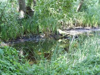 Ufer#1 - Ufer, See, Verlandung, trocknen, austrocknen, Sukzession, Verflachung, verflachen, Moor, feucht, Feuchtgebiet, Veränderung