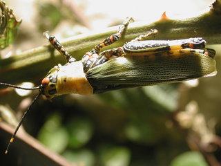 Heuschrecke (1) - Insekten, Heuschrecke, Langfühlerheuschrecke, Insekt, grün