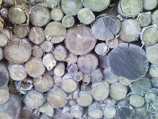 Holzstapel - Holz, Lebensraum, Altholz, Totholz