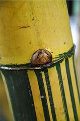 Was_ist_das#Pflanzen - Bambus, Süßgräser, Bambusartige, Pflanze, verholzt, Stamm, Rätsel, Detail