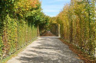 Herbstliche Perspektive - Herbst, Laub, bunt, farbig, Perspektive, Eremitage, Bayreuth, Fluchtpunkt, Hecke, Park