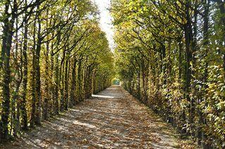 Herbst - Herbst, Laub, bunt, farbig, Perspektive, Eremi, Allee
