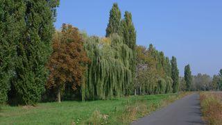 Herbstlandschaft - Herbst, Herbstlandschaft, bunt, Impression, Weg, Fluchtpunkt, Perspektive