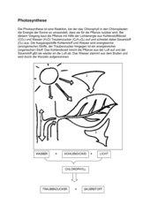 Großartig Photosynthese Bewertung Arbeitsblatt Galerie ...