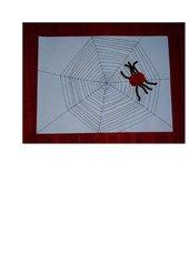 Spinne im Netz