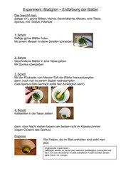 Experiment: Blattgrün - Entfärbung der Blätter (für die Grundschule)